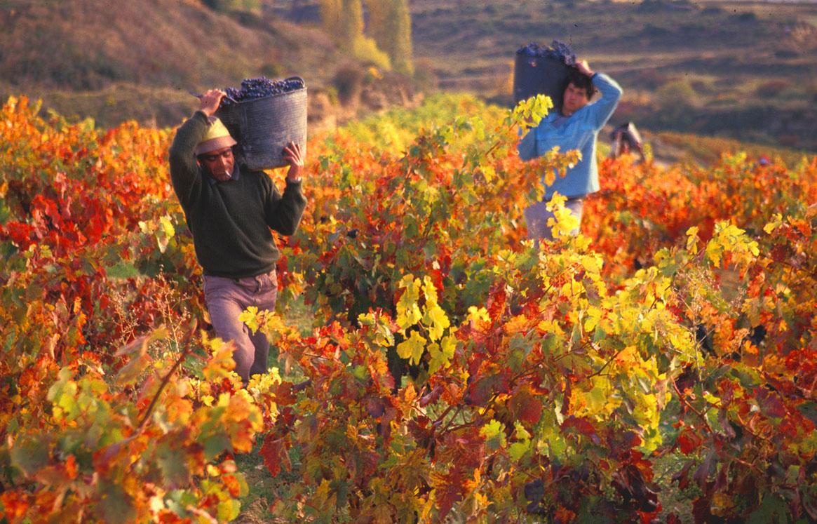 Виноградники Андалусии