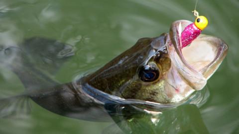 Пресноводная рыбалка в Андалусии