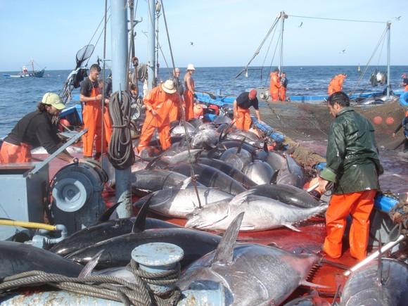 Андалузский лов тунца – альмадраба