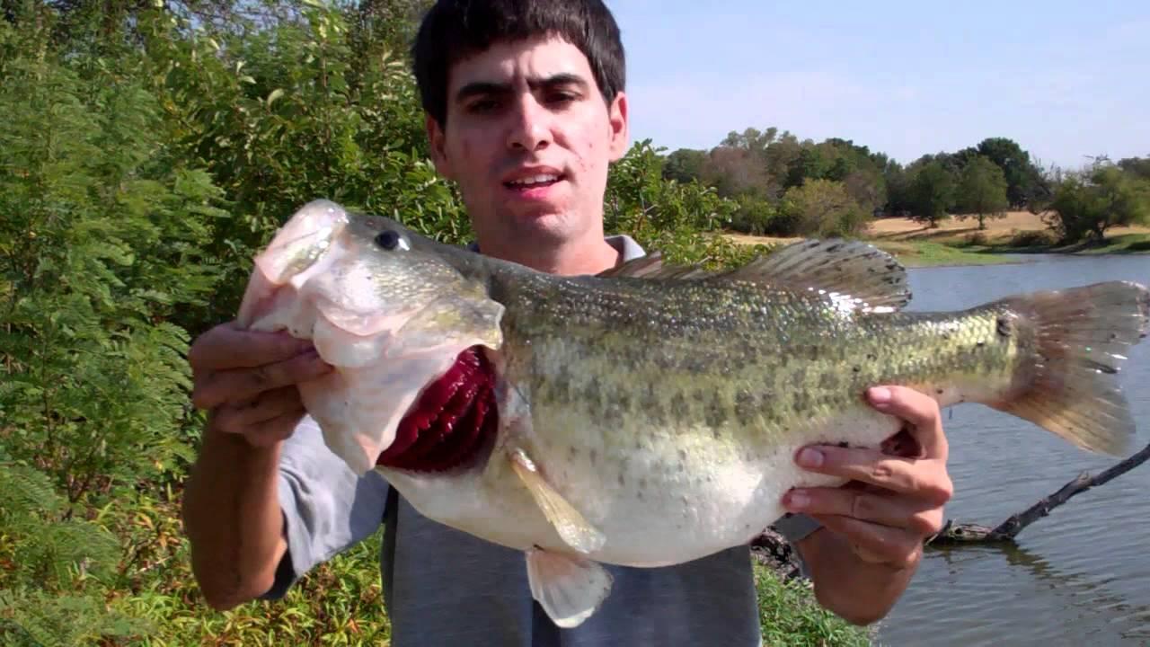 Рыбалка на басса в водоемах Андалусии